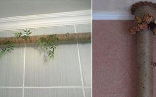 Как закрыть трубы в комнате у окна