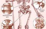 Функции костномозговой полости трубчатой кости
