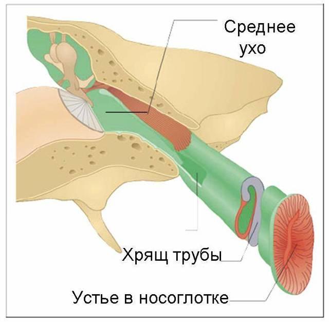 Функция евстахиевой трубы в чем заключается