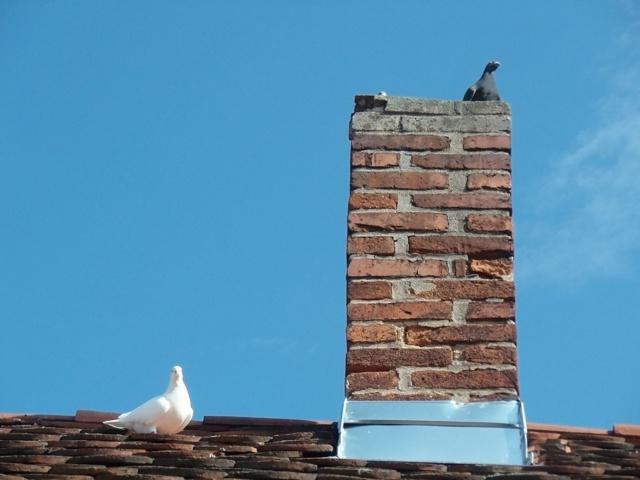 Как защитить трубу от птиц
